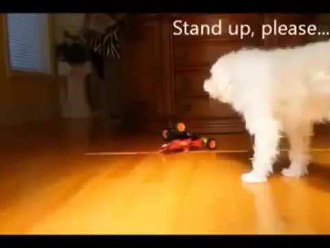 FUNNY VIDEO ANIMAL