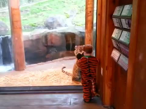 Tiger and child having fun