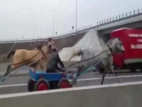 Horse team on the highway