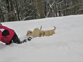 Adorable Golden Retriever Puppies In the Snow! - Video