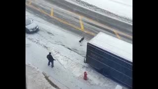 Wild Turkey Chases Down UPS Driver - Video