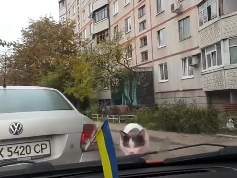 Cat Off the Hood of Your Car -