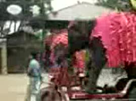 elephant on wheels - Video