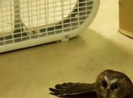 Owl Keeps Himself Cool!