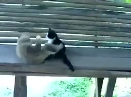 FUNNY VIDEO ANIMAL 1 - Video