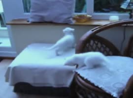 playful kittens xixixi - Video