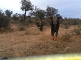 Elephant Attacks Safari Jeep - Video