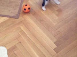 Kitten's First Time Playing With Ball! - Video