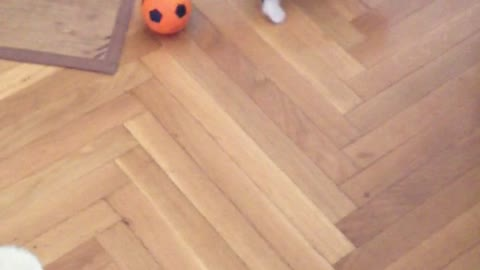 Kitten's First Time Playing With Ball!