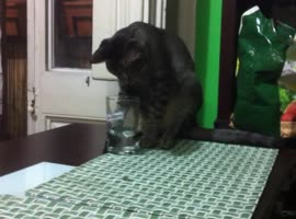 Kitten Fails to Drink Glass of Water!