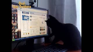 Cat Attempts to Eat Dancing Computer Icon - Video