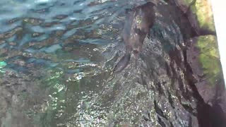 Beautiful Otters *-* - Video