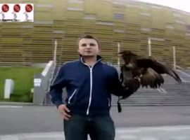 Eagle almost stole puppy - Video