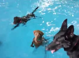 The Non Swimming Dog - Video