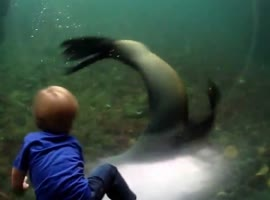 Kid Plays With Seal - Video