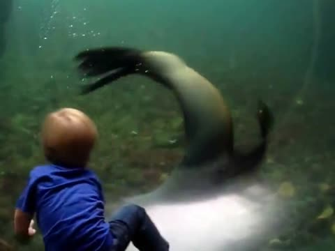 Kid Plays With Seal