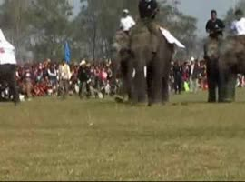 Elephants play soccer! - Video