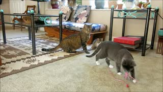 Excited Blind Kitten Wants to Play! - Video