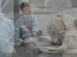 Dog and Boy With Down Syndrome - Video