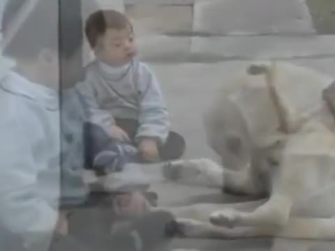 Dog and Boy With Down Syndrome