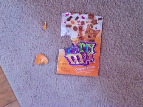 Guilty Dog Ate The Cat Treats