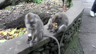 baby monkey wants to live - Video