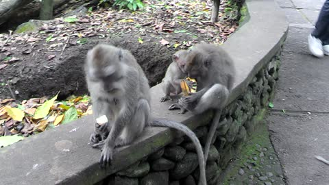 baby monkey wants to live