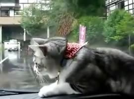Cat vs. Windshield Wipers lol