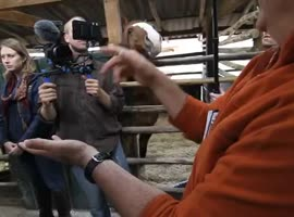 Saucy horse bother operator. Laughter! - Video