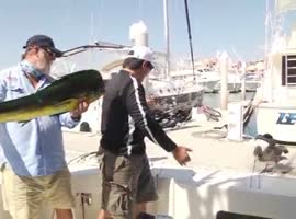 TROPHY FISH GETS STOLEN - Video