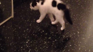 My kitten is frightened look in the mirror - Video