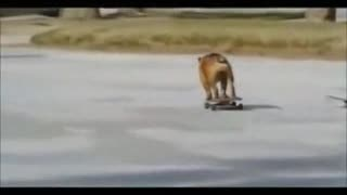 dog su skateboard - Video