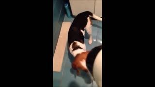 Puppy Quickly Loses Trust With Hair Dryer - Video