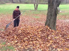 Dog Disappears In Leaf Pile! - Video