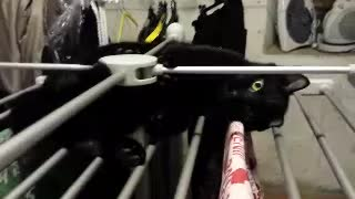Cat on the drying rack - Video