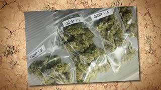 Buy Marijuana Online - Video