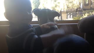 "Baby Calling His Pitbull ""Good Dog"" - Video"
