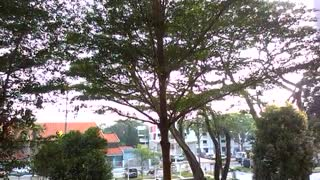 SUNBIRDS  SING   AND  FLY  TOGETHER - Video
