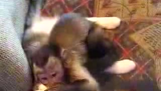 Monkey kisses cat - Video