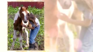 Alexia Wilde breeder of polka dot piglets, gypsy horses and veterinarian - Video