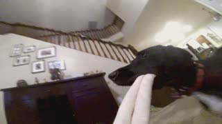 Go Pro Camera Attached to Dog's Chew Toy - Video