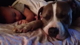 Baby and puppy nap together