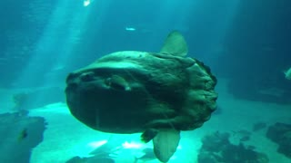 Scary Fish Moon Is Beautifull Or Ugly? - Video