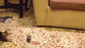 Curious kitten cautious of remote control - Video