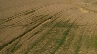 Crop Circle Italy - Video