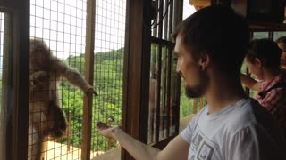 Monkey casually asks for a bite to eat