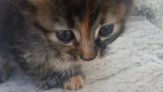 Gatto piccolo - Video