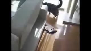 funny cats compilation 2014 - Video