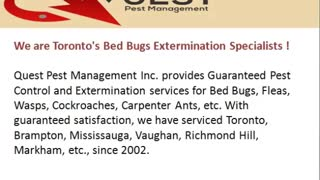 Quest Pest Management Bed Bugs Removal In Toronto - Video