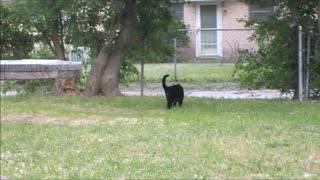 bird chases cat - Video